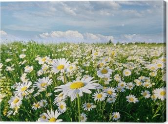 Canvas Springtime: gebied van daisy bloemen met blauwe lucht en de wolken