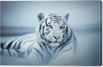 Canvas Tigre