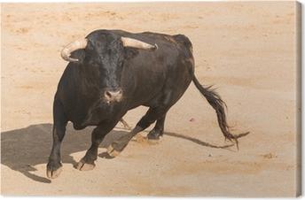 Canvas Toro Bravo Español