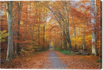 Canvas Traject in de herfst bos