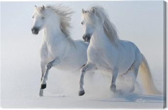 Canvas Twee galopperende sneeuwwitte paarden