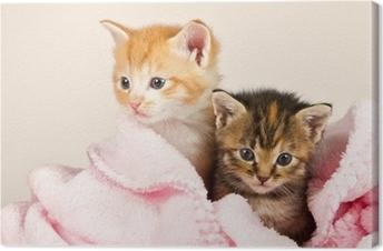 Canvas Twee katjes in een roze deken