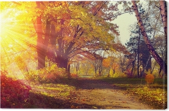 Canvas Vallen. Herfst Park. Herfst bomen en bladeren in zonlicht