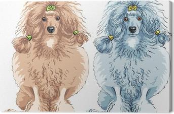 Canvas Vector hond Poedel ras zitten