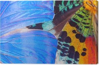 Canvas Veelkleurige vlinders vleugel
