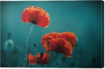 Canvas Verbazend papaverveld. Zomerbloemen.
