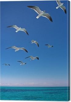 Canvas Verschillende meeuwen vliegen over een blauwe zee