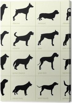 Canvas Verschillende rassen van honden