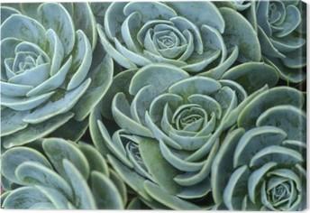 Canvas Vetplant