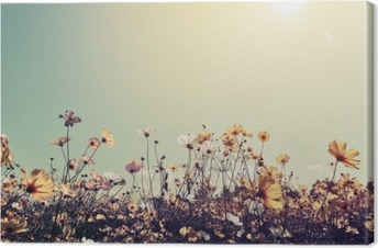 Canvas Vintage landschap natuur achtergrond van mooie kosmos bloem veld op hemel met zonlicht. retro kleurtoon filter effect