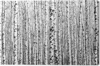 Canvas Voorjaar stammen van berken zwart en wit