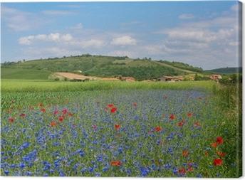 Canvas Weide met korenbloemen en klaprozen in Auvergne