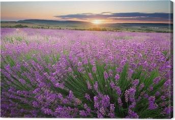 Canvas Weide van lavendel