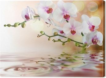 Canvas Witte orchideeën op het water met daling