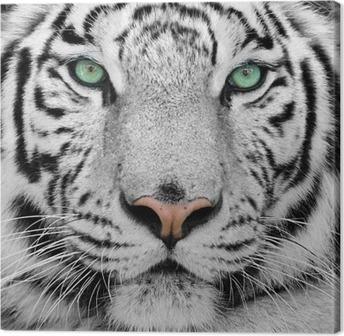 Canvas Witte tijger