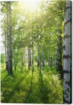 Canvas Zomer berkenbossen met zon