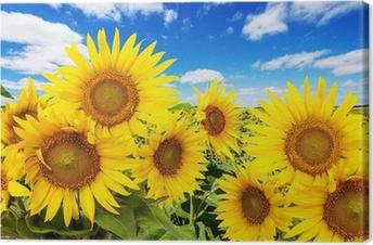 Canvas Zonnebloem veld en blauwe hemel met wolken