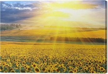 Canvas Zonsondergang boven het veld