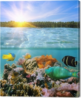 Canvas Zonsondergang en kleurrijke onderwater leven in zee