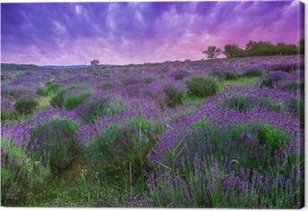 Canvas Zonsondergang over een zomer Lavendel veld in Tihany, Hongarije