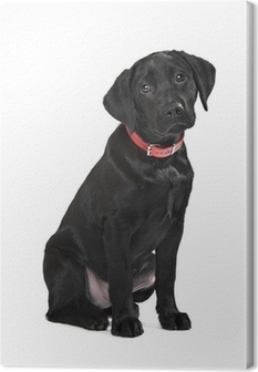 Canvas Zwarte labrador puppy