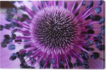 Canvastavla Anamone blomma