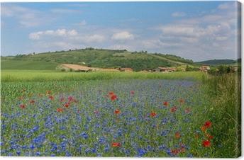 Canvastavla Äng med blåklint och vallmo i Auvergne