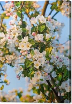 Canvastavla Äppelträd blommar