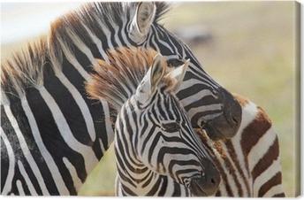 Canvastavla Baby zebra med mamma