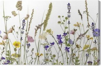 Canvastavla Blommor och örter. En illustration kan sömlöst ansluta vågrätt