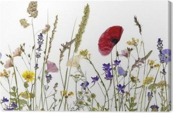 Canvastavla Blommor och örter