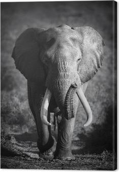 Canvastavla Elefant Bull (Konstnärlig bearbetning)