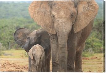 Canvastavla Elefant ko och två kalvar i olika uttryck.