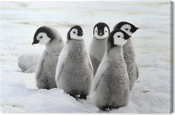 Canvastavla Emperor Penguin
