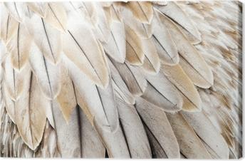 Canvastavla Fågelfjädrar