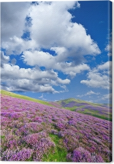 Canvastavla Färgrik sluttning täckt av violetta ljung blommor