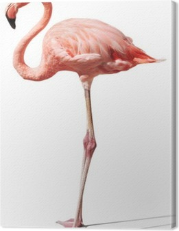 Canvastavla Flamingo, vit