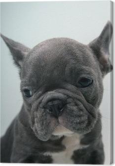 Canvastavla Fransk bulldogg valp porträtt
