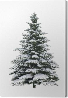 Canvastavla Gran, träd, snö