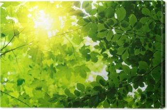 Canvastavla Gröna blad med Sun Ray