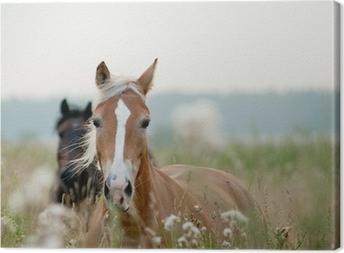 Canvastavla Hästar i fältet
