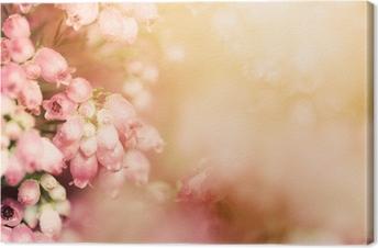 Canvastavla Heather blommor på en nedgång, höst äng i glänsande settng solen