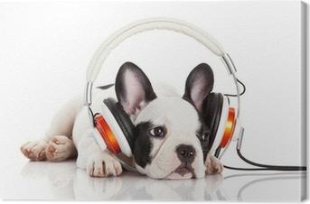 Canvastavla Hund att lyssna på musik med hörlurar isolerad på vitt backgro