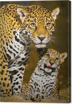 Canvastavla Jaguar Cubs