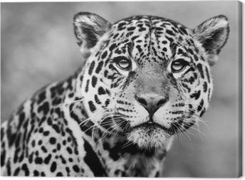 Canvastavla Jaguar - Pantheraonca
