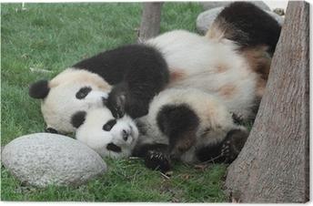 Canvastavla Jätte panda med sin unge sover på gräset