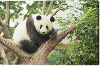 Canvastavla Jätte panda på skog
