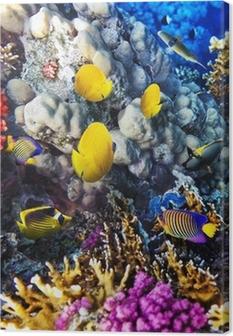 Canvastavla Koraller och fiskar i Röda Sea.Egypt