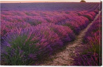 Canvastavla Lavendel fält på soluppgången, Valensole platån (Frankrike)
