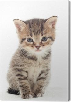 Canvastavla Liten kattunge på vit bakgrund
